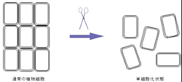 単細胞技術イラスト