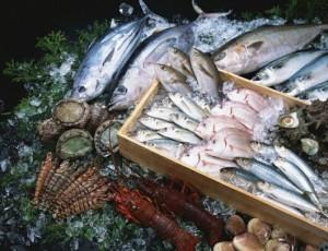 鮮魚の写真