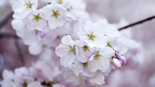 あなたは大丈夫?春に起こる体調不良の原因と対策