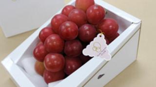 薬膳でも大人気の葡萄の効果・効能をご紹介